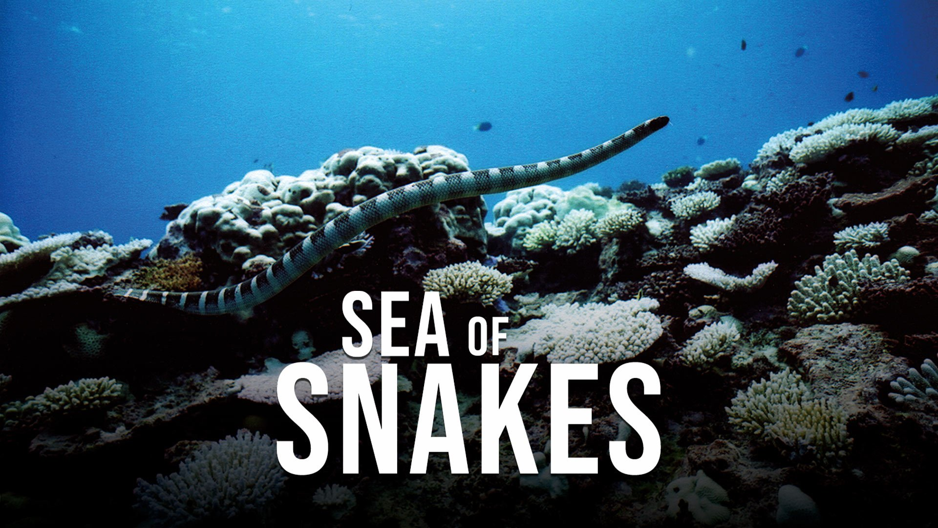 Sea of Snakes on BritBox UK